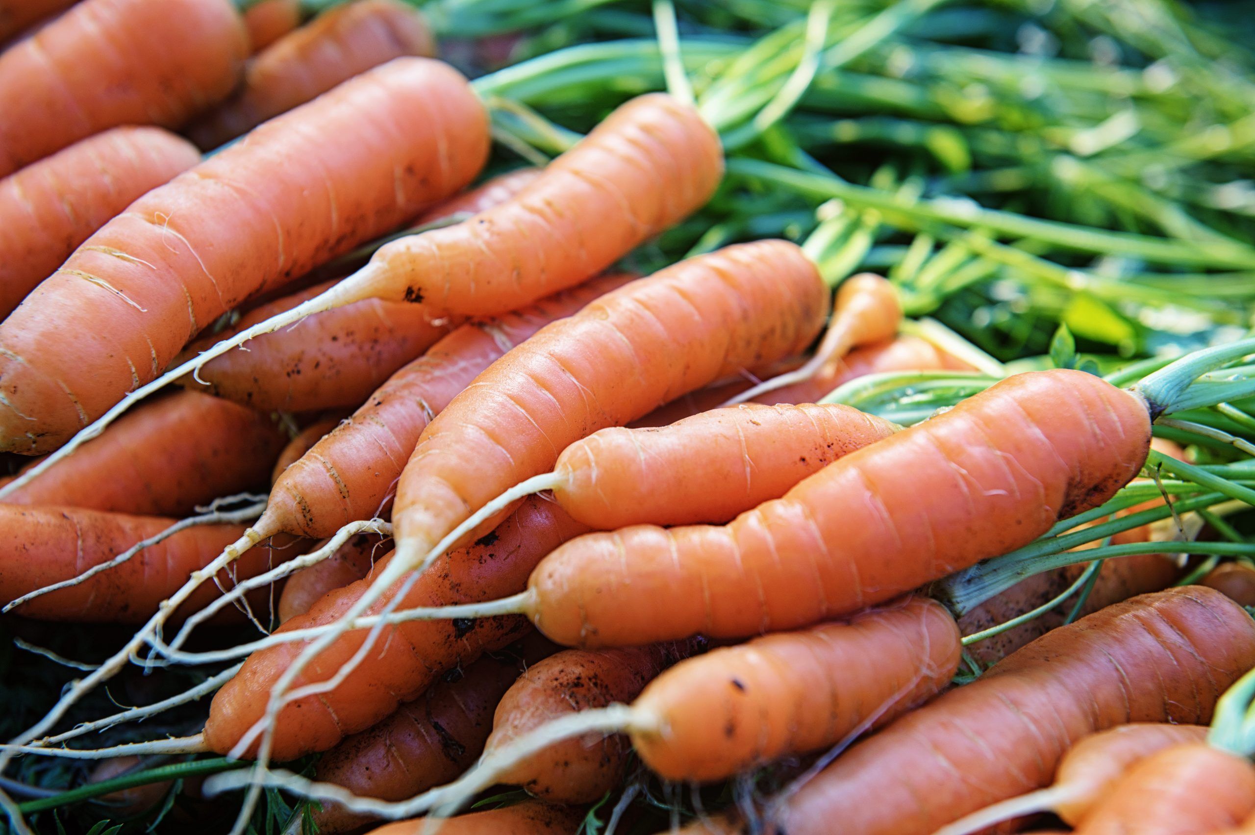 Carrots Lying on the Ground